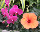 Orchid,Tropical Climate,Lus...