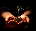 Seedling,Human Hand,Hands C...