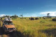 Safari,Africa,Safari Animal...