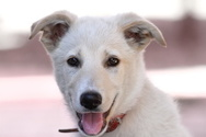 Cheerful,Pets,Dog,Close-up,...