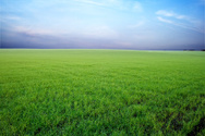 Night,Grass,Field,High Angl...