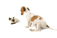 Dog,Domestic Cat,Animal,Pup...