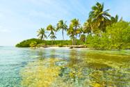 Reef,Caribbean,Coral,Desert...