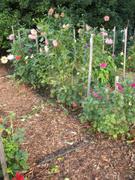 Formal Garden,Flower Bed,Or...