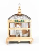 Domestic Cat,Bird,Cage,Anim...
