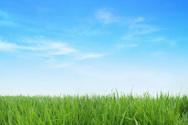Grass,Sky,Backgrounds,Blue,...