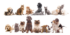 Dog,Domestic Cat,Group Of A...