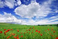 Field,Green Color,Beauty In...