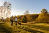 Walking,Autumn,Nature,Rear ...