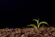 Dirt,Growth,Seedling,Plant,...