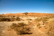 Desert,Africa,Namibia,Dry,G...