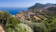 Majorca,Vineyard,Spain,Land...