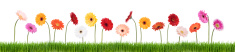 Flower,Springtime,Daisy,Gra...