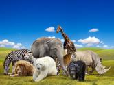 White Tiger,Animal,Polar Be...