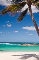 Beach,Palm Tree,Tropical Cl...