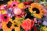 Gerbera Daisy,Rose - Flower...