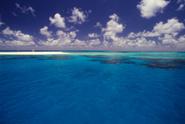 Reef,Sea,Beach,Tropical Cli...