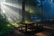 Forest,Fantasy,Sunbeam,Tabl...