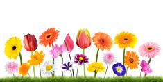 Daisy,Orange Color,Grass,Is...