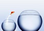 Goldfish,Fishbowl,Jumping,F...