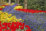 Flower,Frame,Purple,Field,O...