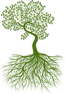 Tree,Root,Leaf,Growth,Plant...