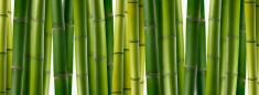 Bamboo,Bamboo Shoot,Bamboo,...