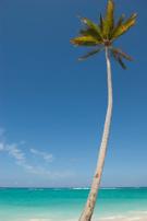 Cruise,Palm Tree,Tropical C...