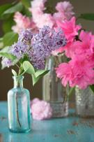 Lilac,Vase,Cherry Blossom,F...