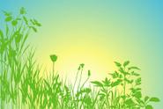 Field,Nature,Herbal Medicin...