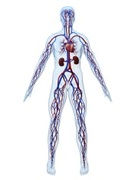 Cardiovascular System,Blood...