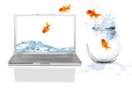 Change,Goldfish,Fish,Comput...