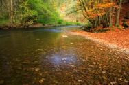 Autumn,River,Stream,Leaf,Fo...