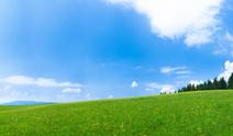 Landscape,Grass,Sky,Tree,Fi...