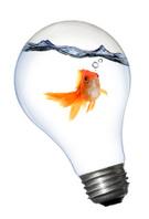 Fish,Light Bulb,Goldfish,Cr...