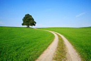 Road,Tree,Single Lane Road,...