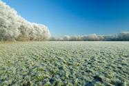 Frost,Field,Winter,Snow,Gra...