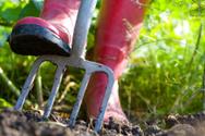 Gardening,Vegetable Garden,...