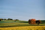 Denmark,Autumn,Landscape,Ag...