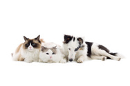 Domestic Cat,Dog,Group Of A...