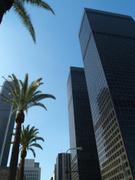 City Of Los Angeles,Palm Tr...