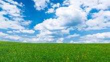 Field,Flower,Sky,Cloud - Sk...