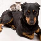 Dog,Animal,Care,Friendship,...