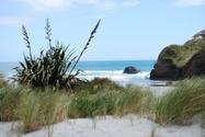 Landscape,New Zealand Flax,...
