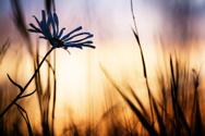 Sunset,Flower,Grass,Autumn,...