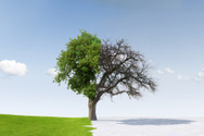 Change,Winter,Tree,Summer,S...