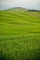 Hill,Green Color,Grass,Sky,...