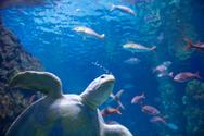 Fish,Turtle,Sea,Underwater,...