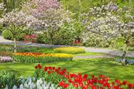 Flower,Park - Man Made Spac...