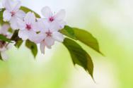 Flower,Springtime,Blossom,L...